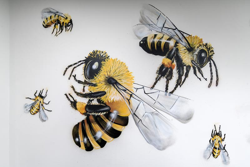 AFL Insurance Bee Artwork